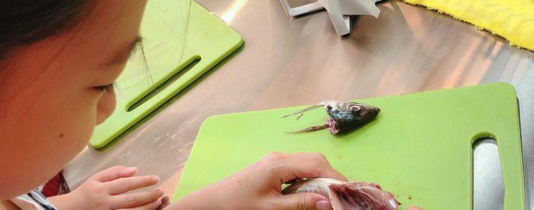 夏休み限定イベント教室「おさかな教室」レポ②
